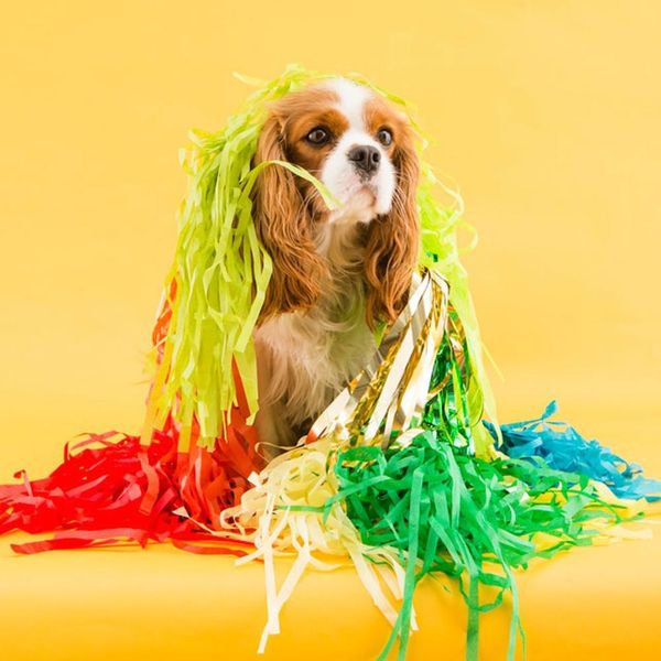 How to Host a Halloween Party… for Dogs