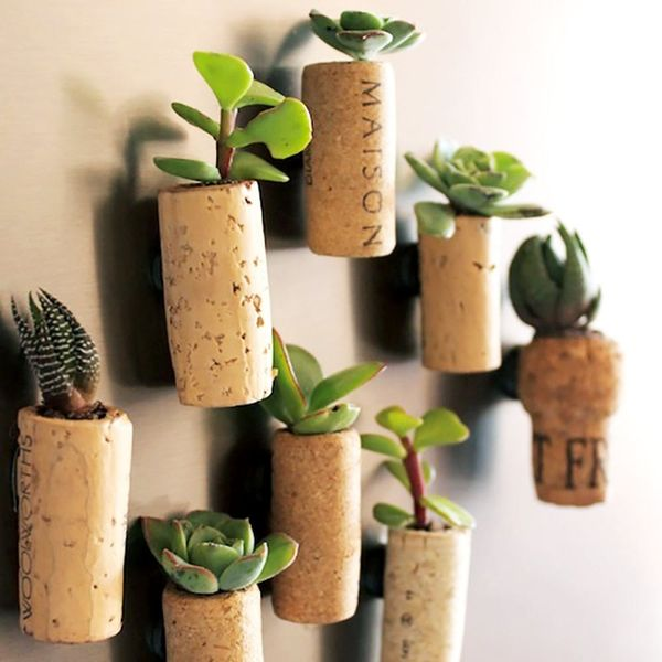 11 Unique Ways to Use Succulents in Your Home