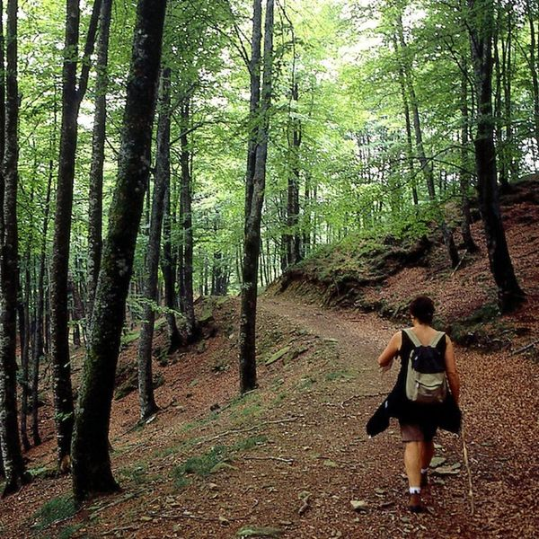 How Hiking Will Make You Happier