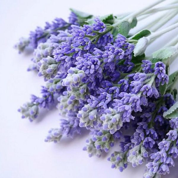 11 Ways Beauty Bloggers Use Lavender in Their Beauty Routines