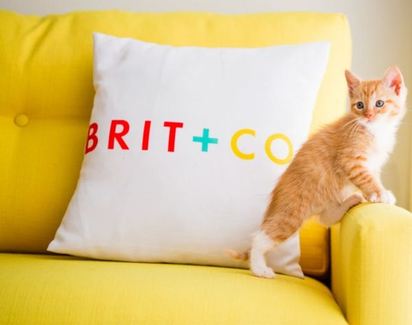 WTF: There Are Now Robotic Mice for Your Cat