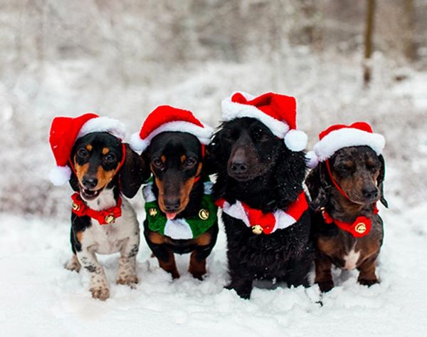 16 Creative Ideas for Putting Pets in Your Holiday Photos