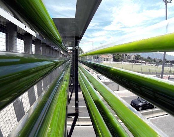 These Algae Farms Could Help Clean Up Air Pollution