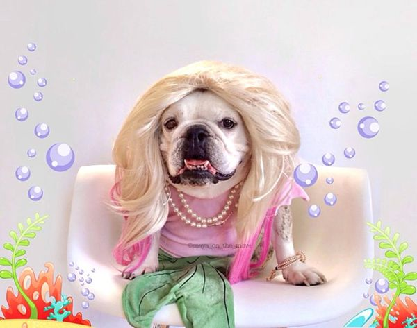 Maya the Bulldog Has Officially Won Halloween