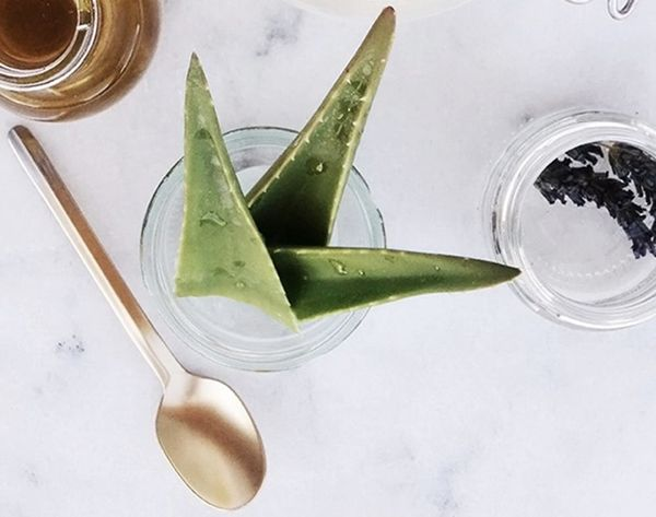 15 Reasons Aloe Should Be Your Beauty Bestie for Life