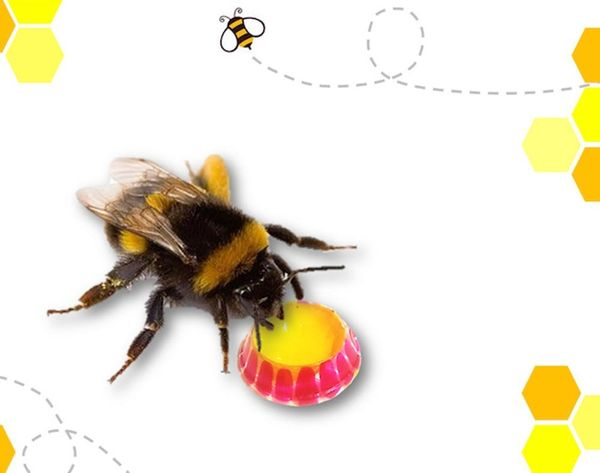 This Little First Aid Kit Will Help You Save the Bees