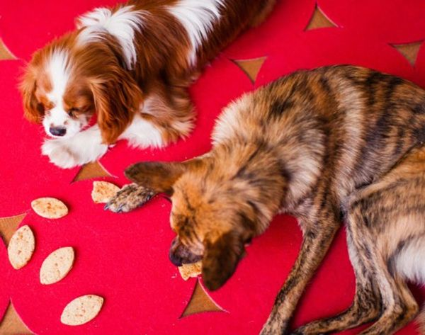 Keep Your Dog Entertained While You're Away With Droppi
