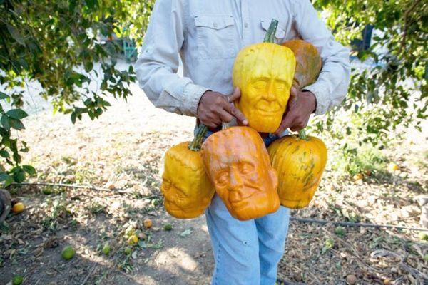 WTF? These Pumpkins Grow Into Jack-o'-Lanterns!