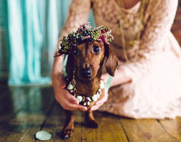This Is What a Dog Wedding Looks Like