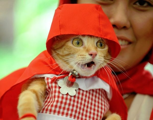 Meowsers! A Dozen Halloween Costumes for Your Favorite Feline