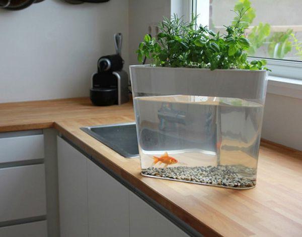 OMG: Your Goldfish Can Grow a Garden