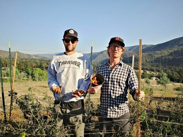 These Two Bros Are Making Olive Oil for You in SF