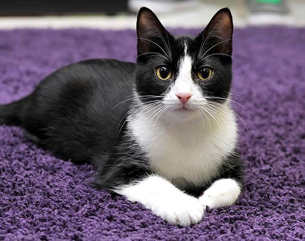 Believe It: Cat Hammocks Are a Thing