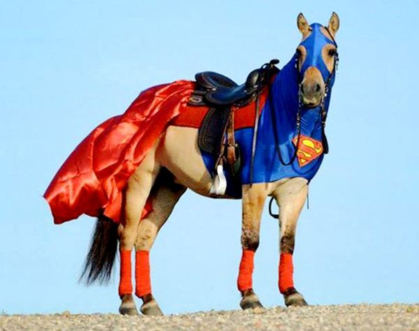 WTF?! 12 Horses With Better Costumes Than You