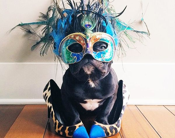 The 11 Most Stylish Dogs on Instagram