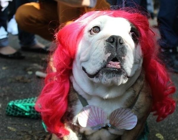 12 Under the Sea Costumes for Your Pup