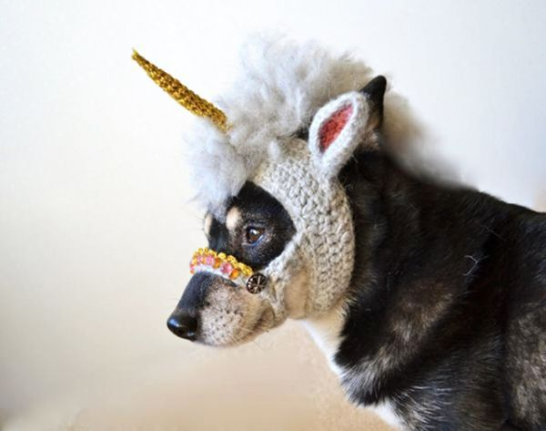 22 Funny Dog Costumes for Halloween