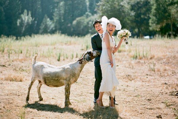 30 Unusual Ideas for an Animal-Inspired Wedding