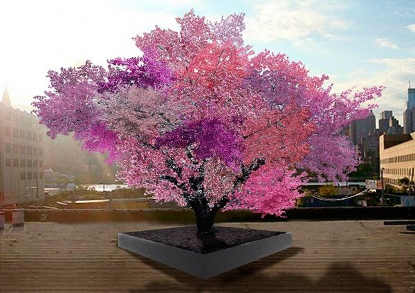 WTF: This One Tree Produces 40 Kinds of Fruit