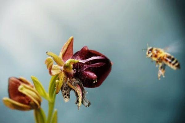 3D Printing Bees Could Make Way More Than Honey
