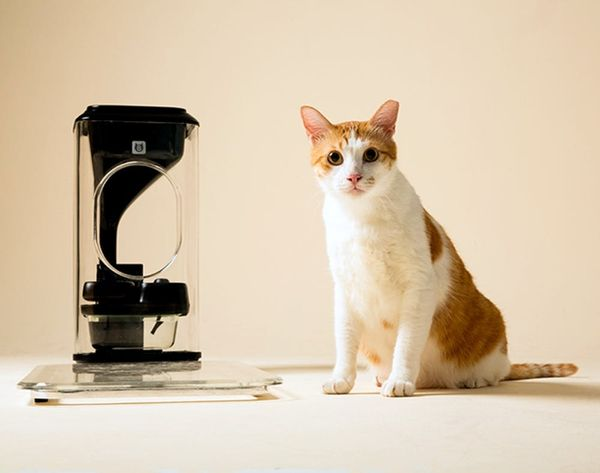 This Gadget Feeds Your Cat Using Facial Recognition Software