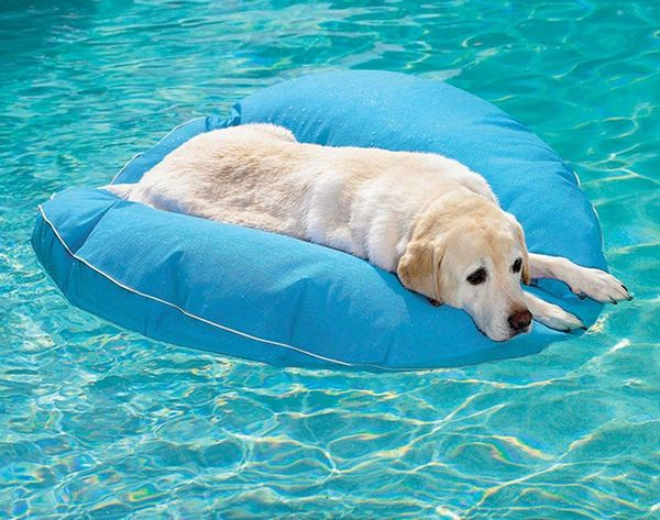 12 Summer Accessories to Keep Your Pets Cool