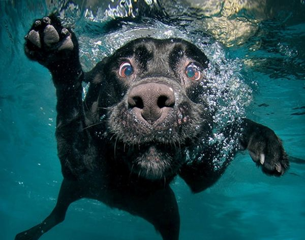 Underwater Dogs Is Seriously the Best Thing Ever