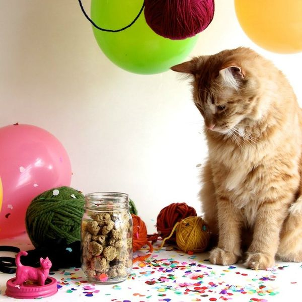 12 Homemade Cat Treats and Toys Your Kitten Will Love