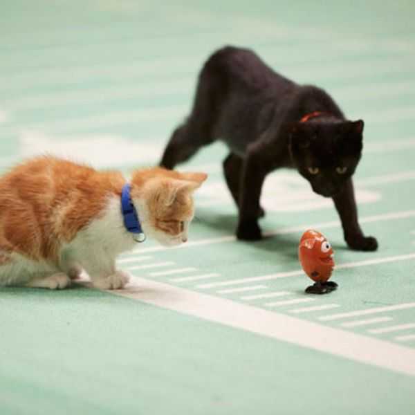The Kitten Bowl = A Purr-fect Lineup of All-Star Cat-letes