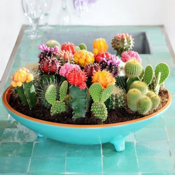 15 Ways to Show Off Your Plants