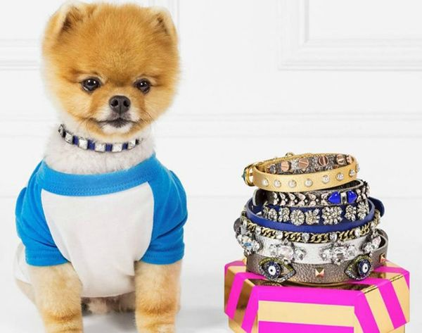 These Instagram Star-Approved Pet Collars Bring on the BLING
