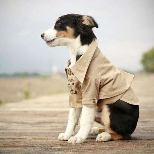 Canine Cool: 13 Warm Outerwear Options For Your Pup