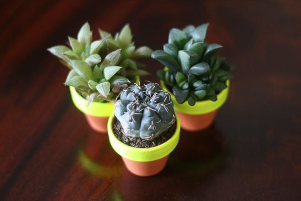 From Cider to Succulents: 12 DIY Gift Ideas for the Hostess
