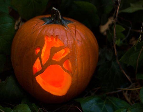 Creep to This: Anatomy Pumpkins