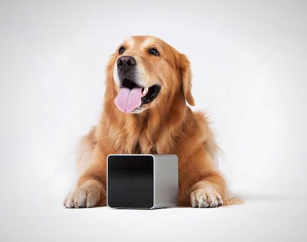 Petcube Lets You Play With Your Dog From Anywhere