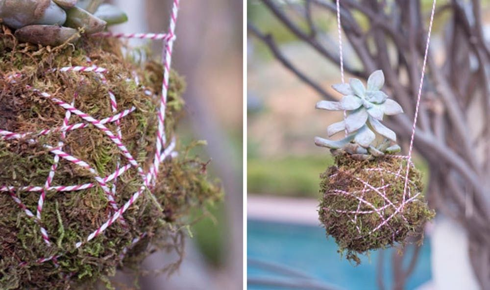 How To Create A Hanging Succulent Planter Brit Co
