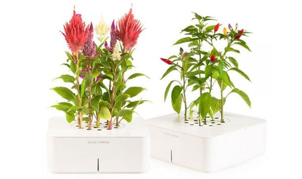 Click and Grow Automatically Waters and Cares for Your Plants