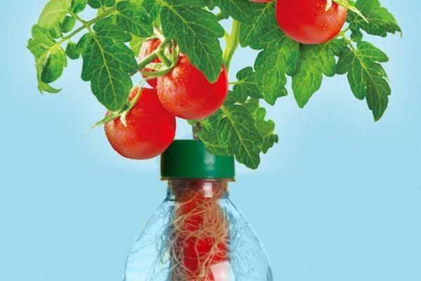 How to Turn Plastic Bottles Into Veggie Gardens