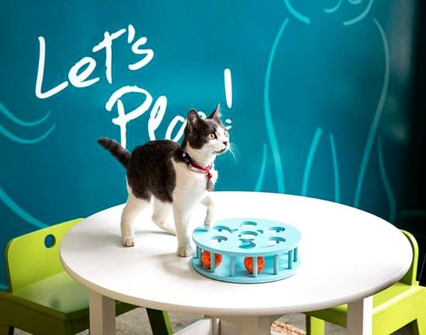 Come Inside the First Ever Pop-Up Cat Cafe (Curiosity Is Safe Here!)