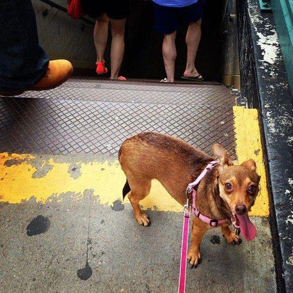 Made Us Look: Doggie Documentaries