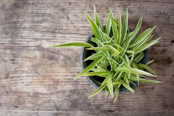 15 House Plants for Urban Dwellers