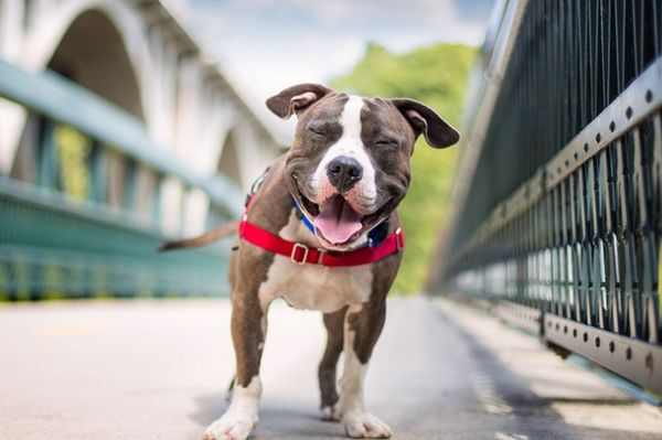 Cute Overload: 10 Smiling Pups to Perk Up Your Day