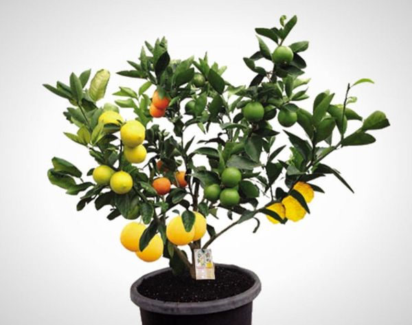 WTF?! This 1 Tree Grows 7 Different Kinds of Fruit. No Joke!