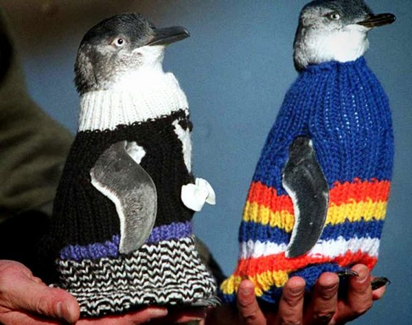 How to Use Your Knitting Skills to Literally Save Penguin's Lives <3