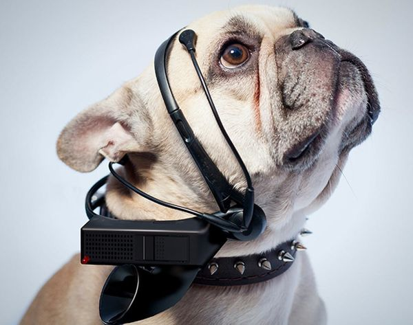 Read Your Dog's Mind (Literally!) With This Insane Gadget