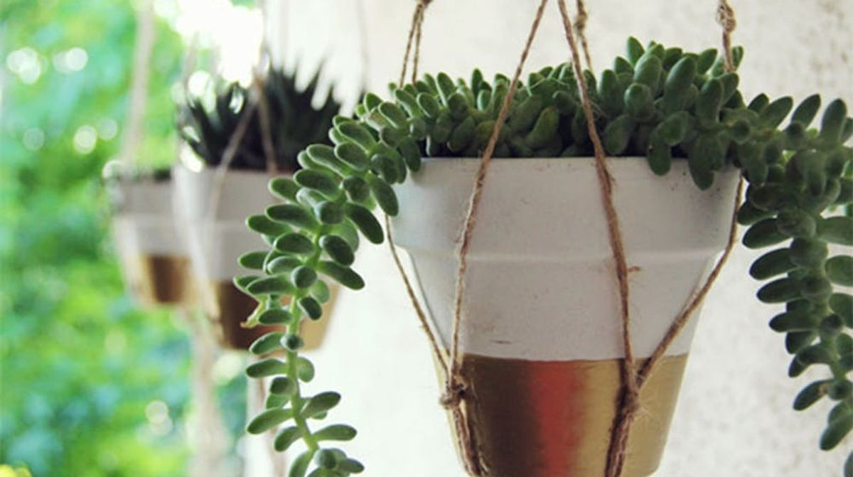 Twin Platform Bed Ikea, 18 Indoor Garden Ideas To Green Your Apartment Brit Co