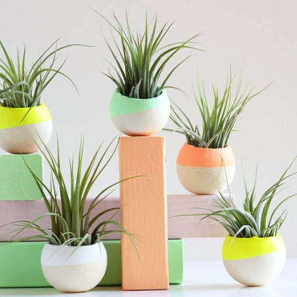 14 Ways to Decorate With Air Plants (aka the New Succulent!)