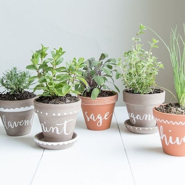 10 Tiny Herb Garden Ideas That Will Fit in Any Apartment