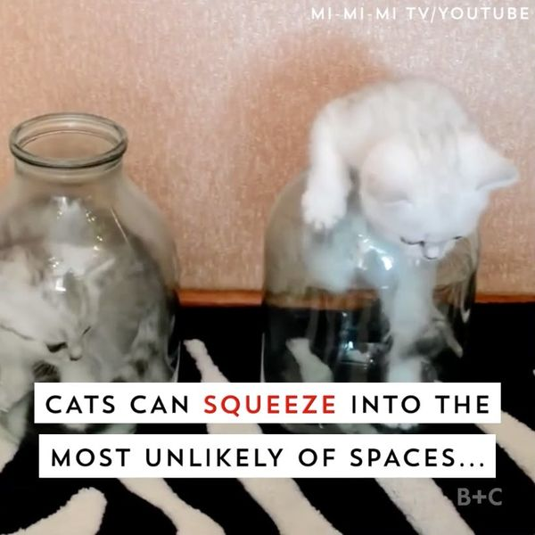 Cats Can Squeeze Into the Most Unlikely Places