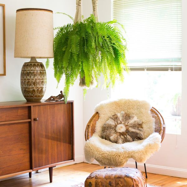 air purifying houseplants